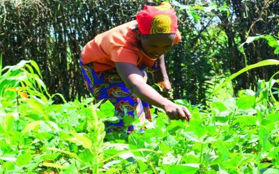 TRACES OF HOPE THROUGH SUSTAINABLE AGRICULTURE